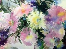 水彩艺术背景五颜六色的花翠菊 免版税库存照片