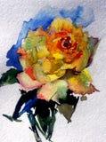 水彩艺术背景五颜六色的花茶上升了 库存照片