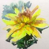 水彩艺术背景五颜六色的花黄色大丽花 库存图片