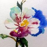 水彩艺术背景五颜六色的花 库存图片