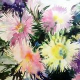 水彩艺术背景摘要精美浅绿色的黄色桃红色白色翠菊开花 免版税库存照片