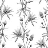 水彩花卉传染媒介样式 库存图片