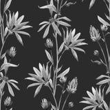 水彩花卉传染媒介样式 库存照片