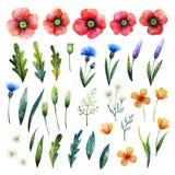 水彩花卉元素 鸦片、矢车菊、春黄菊和叶子 手拉的野花 图库摄影