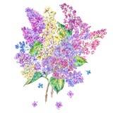 水彩花卉春天卡片,丁香开花的分支  免版税库存图片
