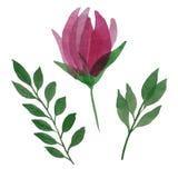 水彩花和叶子 向量例证