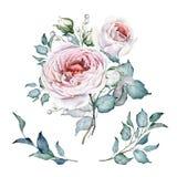 水彩花集合 E 白色和桃红色玫瑰 brander 库存例证