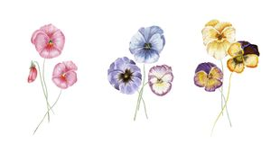 水彩蝴蝶花花 向量例证