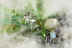 水彩被绘的白色蘑菇 库存图片
