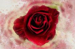 水彩被绘的红色玫瑰 向量例证
