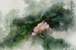 水彩被绘的美丽白桃红色上升了 库存例证