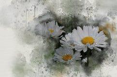 水彩被绘的美丽的戴西 皇族释放例证