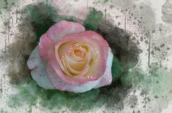水彩被绘的美丽的桃红色玫瑰 库存例证
