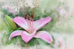 水彩被绘的美丽的桃红色百合 皇族释放例证