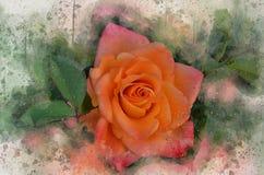 水彩被绘的美丽的桔子上升了 向量例证