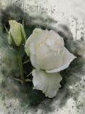水彩被绘的美丽的白色玫瑰 库存例证