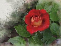 水彩被绘的美丽的红色玫瑰 皇族释放例证