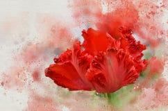 水彩被绘的美丽的红色郁金香 库存例证