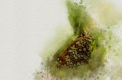 水彩被绘的美丽的蝴蝶 库存例证