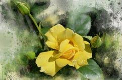水彩被绘的美丽的黄色玫瑰 免版税库存照片