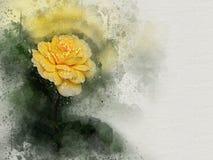 水彩被绘的美丽的黄色玫瑰 向量例证