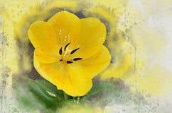 水彩被绘的美丽的黄色郁金香 皇族释放例证