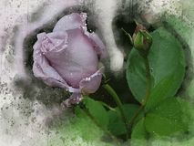 水彩被绘的美好的紫罗兰上升了 皇族释放例证