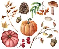 水彩被设置的秋天植物 手画南瓜,叶子,蘑菇,花揪,苹果,锥体,在白色隔绝的橡子 皇族释放例证