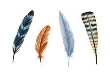 水彩被设置的鸟羽毛 设计的手画艺术性的元素 向量例证