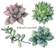 水彩设置与多汁植物和分支 与在白色和分支的手画五颜六色的花隔绝的叶子 库存图片