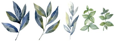 水彩设置与森林叶子 水墨画例证 向量例证