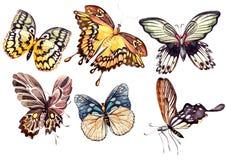 水彩设置与蝴蝶 库存例证