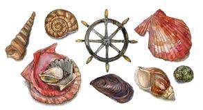 水彩设置与贝壳 图库摄影