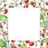 水彩贺卡,邀请用植物草莓 开花的灌木用一朵红色莓果和花 向量例证
