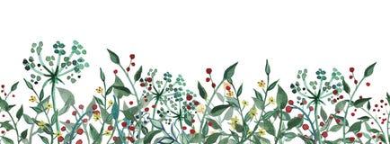 水彩野花,草本,叶子 E r 皇族释放例证