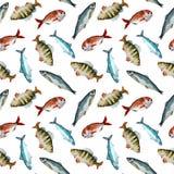 水彩鱼样式 库存例证