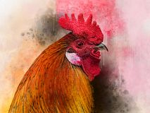 水彩鸡 手拉的水彩公鸡,鸟例证 免版税库存图片