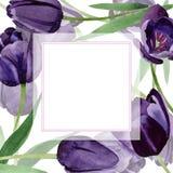 水彩黑郁金香花 花卉植物的花 框架边界装饰品正方形 库存例证