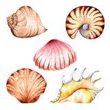 水彩,珊瑚,集合,海绵,海洋 图库摄影