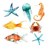 水彩,珊瑚,集合,海绵,海洋 免版税库存照片