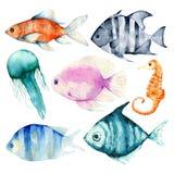 水彩,珊瑚,集合,海绵,海洋 库存图片