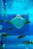 水族馆光芒面带笑容 库存照片