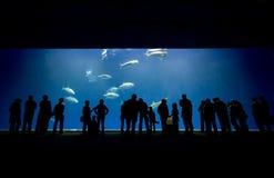 水族馆旁观者 库存照片