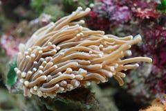 水族馆珊瑚 库存照片
