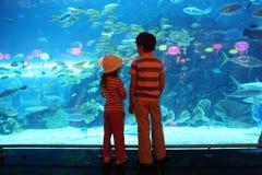 水族馆男孩水下女孩的隧道 免版税图库摄影