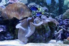 水族馆礁石 库存图片