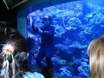 水族馆维护潜水者 太平洋的水族馆,长滩,加利福尼亚,美国 免版税库存图片
