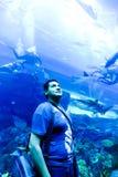 水族馆迪拜 库存图片