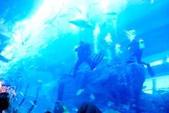 水族馆迪拜 免版税库存图片