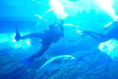 水族馆迪拜 免版税库存照片